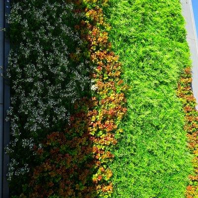 Instalación jardín vertical en Valencia