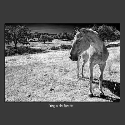 Decoración con fotografías en blanco y negro