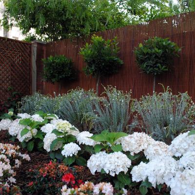 Recuperación de Jardín
