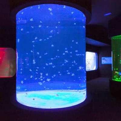 Acuarios de medusas