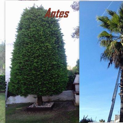 poda de un árbol y una palmera