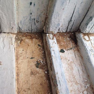 Desinsectacion de hormigas