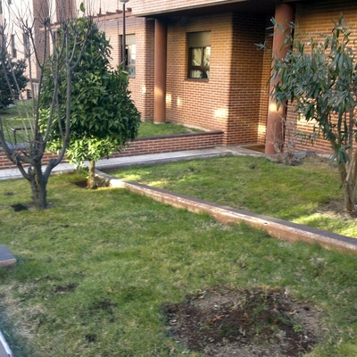 Precio plantar cesped habitissimo for Arreglar jardin barato