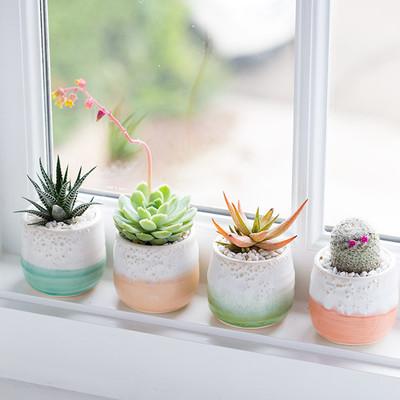 10 ideas para decorar tu casa con cactus