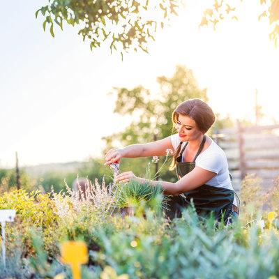 Jardineria Murcia