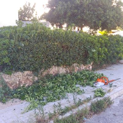 Limpieza de jardineras...poda de setos...limpieza de hierbas...