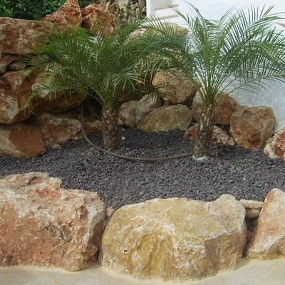 Creación de jardinera con 2 ejemplares de robellini, malla anti-hierba y piedra decorativa