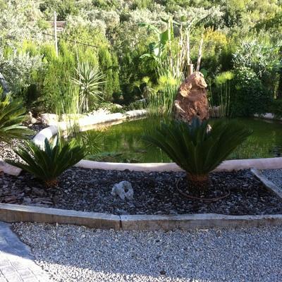 Contruccion de un lago para adorno del jardin