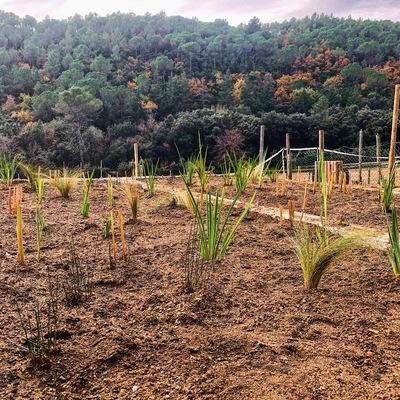 Depuradora Natural en el Montseny