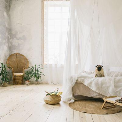 Mosquiteras: revisa y prepara tu casa para evitar visitantes inoportunos