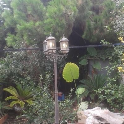 Limpiar un patio  de árboles y plantas
