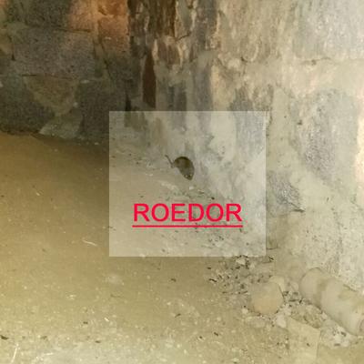 Trabajo de eliminación de plaga de ratas en Torrelodones