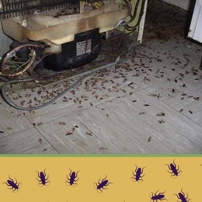 Eliminacion total de insectos