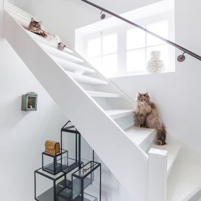 Qué necesita tu casa si tienes un gato