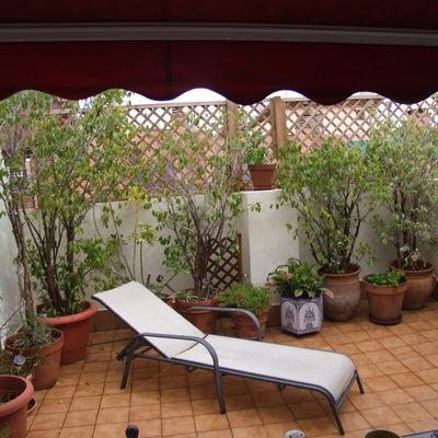 Jardín en la terraza de un ático en la ciudad de Valencia