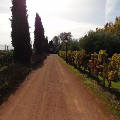Hormigón impreso en laguardia, La Rioja (FASE 1)