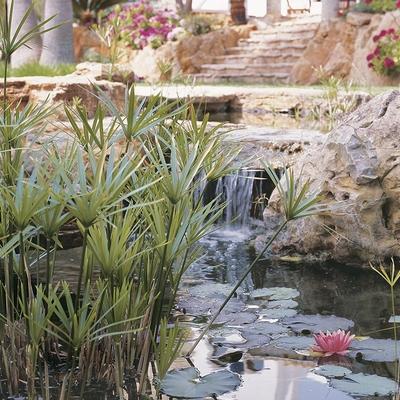 Todo lo que debes saber para construir un estanque artificial en casa