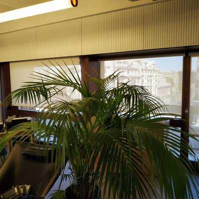 Suministro e instalación de Estores Enrollables de Screen Caricia en Oficina
