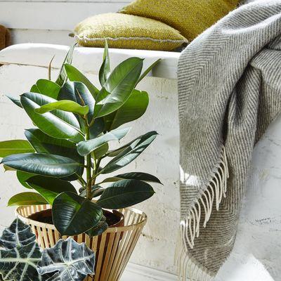 7 plantas que atraen a la energía positiva