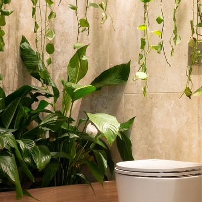 Las 7 mejores plantas de interior