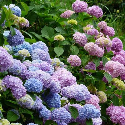 6 plantas de todo tipo para un jardín con encanto