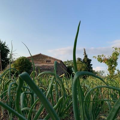 Cultivo y mantenimiento de huertos