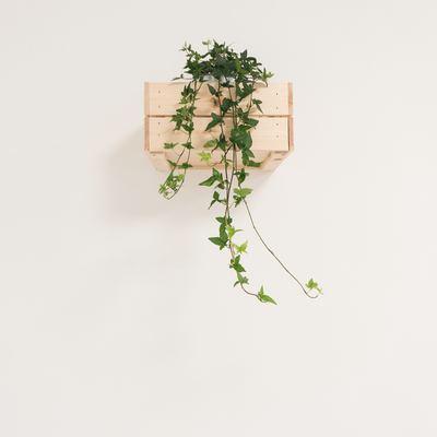 Cómo tener tu pequeño jardín vertical
