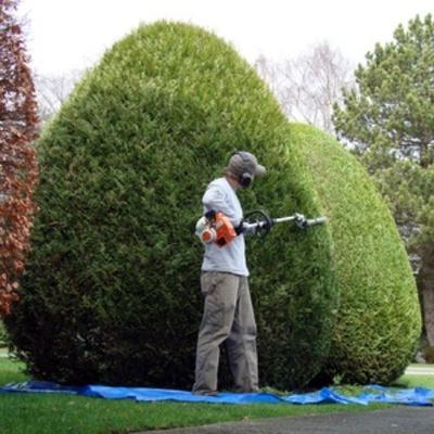 Presupuesto peque os trabajos jardiner a online habitissimo for Imagenes de jardineria gratis