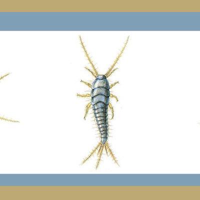 Todo lo que debes saber sobre la plaga de pececillos de plata