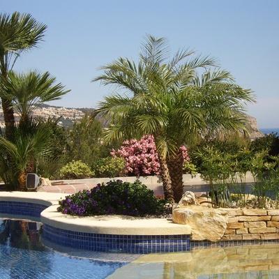 Trabajos de mantenimiento de los jardines y piscinas de nuestros clientes, Valencia