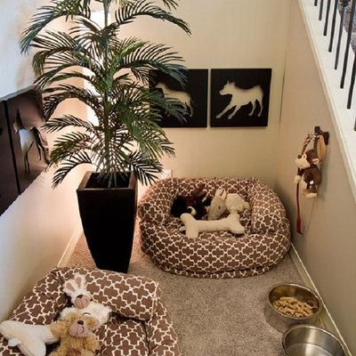 mascotas hueco escalera