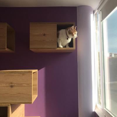 Módulos de escalada para gatos