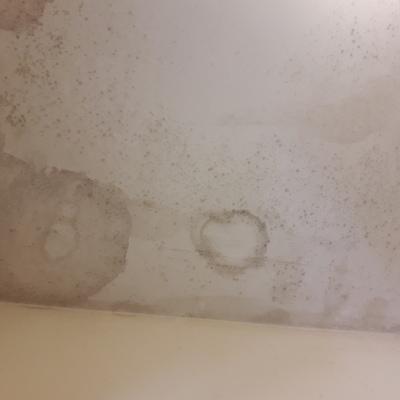 Limpieza de moho y saneamiento de techos y paredes