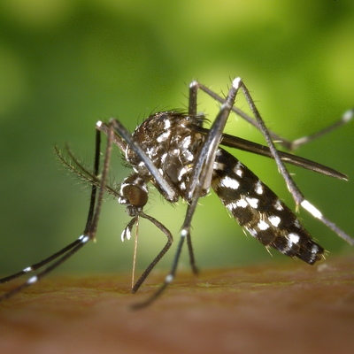El Ayuntamiento de Sagunto confía en Anticimex para combatir la proliferación del mosquito tigre