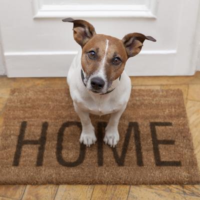 Perro encima de una alfombra