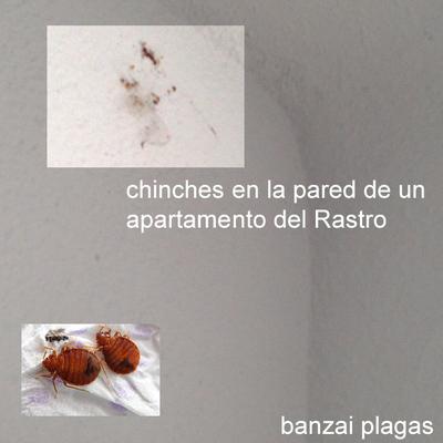 Eliminación de plaga de chinches