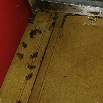 Erradicación de plaga de cucarachas