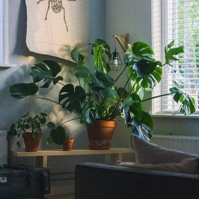 Dime cómo es tu casa y te diré qué planta elegir