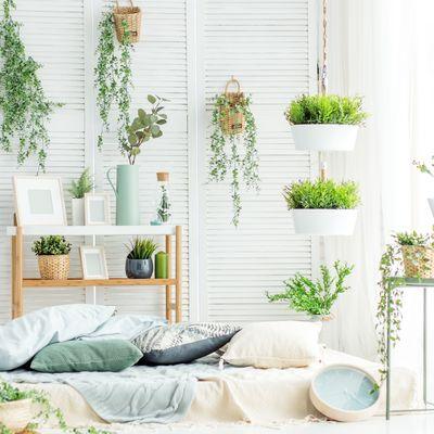 Trucos para que tus plantas sobrevivan al invierno