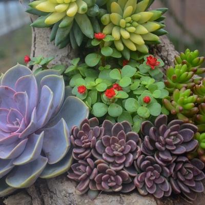 Crea un jardín resistente a las olas de calor