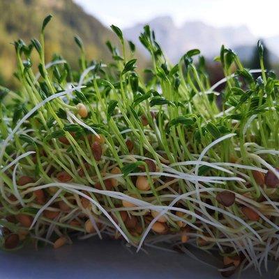 Pon al día tu huerto: Qué sembrar en noviembre