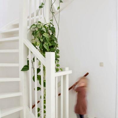 Hazlo tú mismo: Plantas colgantes para decorar