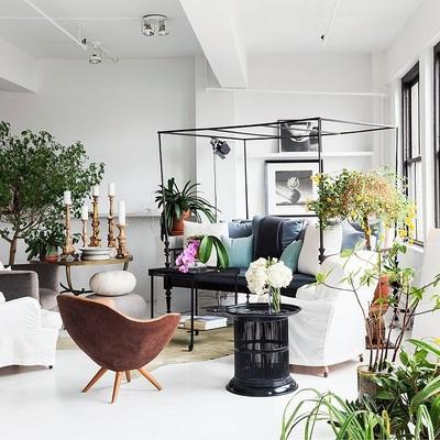Ideas y fotos de plantas sal n para inspirarte habitissimo for Plantas salon