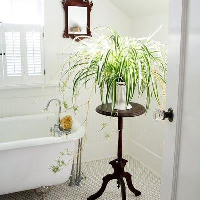 ¡Decora el baño con plantas!