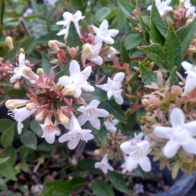 Plantas aromáticas que perfumarán tu jardín todo el año