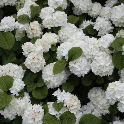 Ideas de decoraci n jardines para inspirarte habitissimo for Plantas aromaticas exterior todo el ano