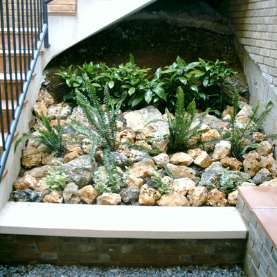 Plantas y piedra