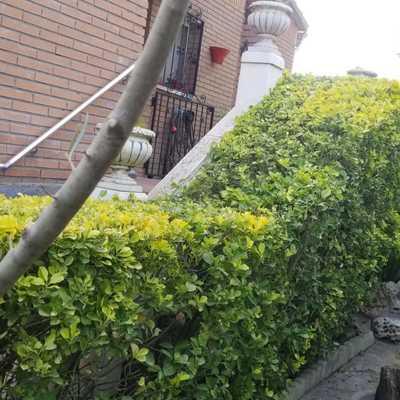 Puesta a punto de jardín y arbustos