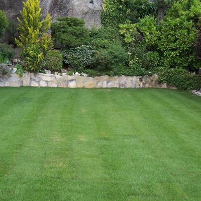 Proyecto de nuevo Jardín en Torrelodones