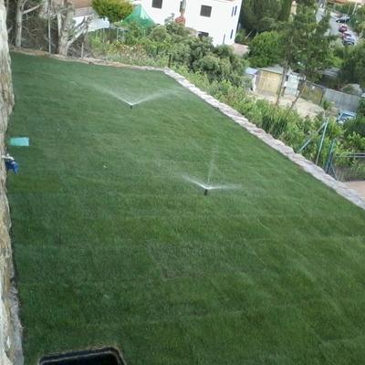 Creación de jardines, Madrid